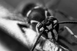 Wasp by NJM1112