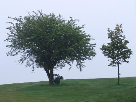 Two Trees by PaulineMoss