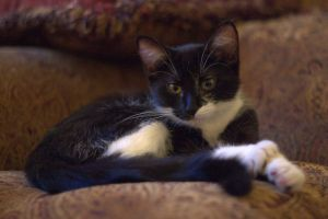 lLulu on the couch III by Ennev