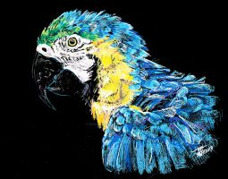 Blue n Yellow macaw by dessinateur777
