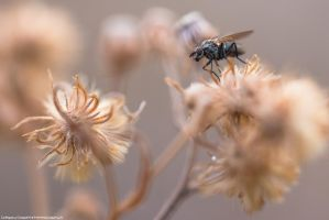 Winter Fly by FemtoGraphy