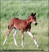 Friendly Mare Foal 12 by okbrightstar-stock