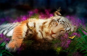 Tiger Dreams by Foxfires
