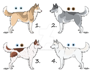 Siberian Husky Adopts - OPEN! by AndesTheWolf