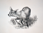 Chinese Water Deer by MO-ffie