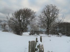 Just Winter in Melsted5