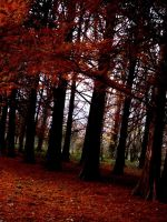 Darkwoods_by_ukdecay by Ro-nature