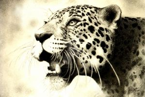 Leopard-retouch by realitysquared