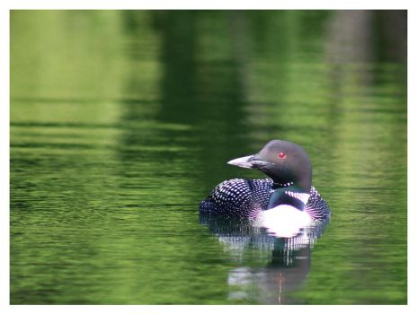 Just Another Loon by bensinn