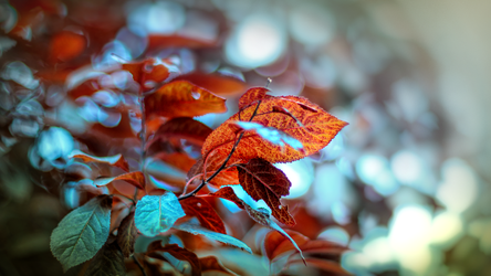 RED forest by lubbo