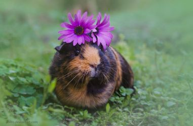 Flowery Pig by ABilro