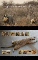 2016 AfricAnimals Calendar by Crooty