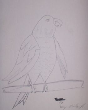 Parrot by yesyes5