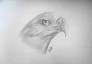 Eagle (with tutorial) by ShinzaK