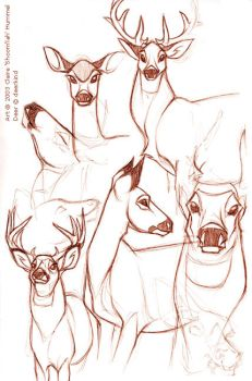 Deer studies by shoomlah