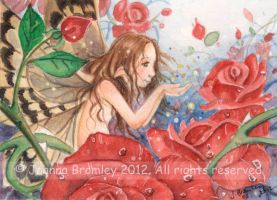 ACEO A Love of Roses by JoannaBromley