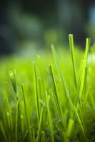 Morning Grass 13658955 by StockProject1