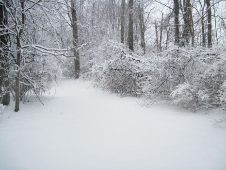 Forest Path in Winter 6 by Martut