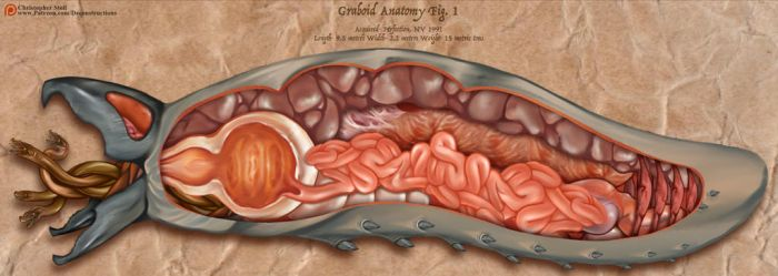 Graboid Anatomy by Christopher-Stoll