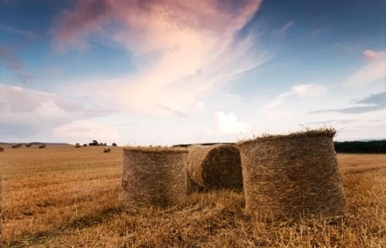 .: Evening Hay Bails :. by DavidCraigEllis