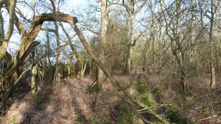 Walk in the Woods- Feb 2016- Trees 2 by andynortonuk
