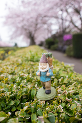 Hedges Gnome by thedustyphoenix