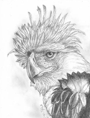 Filipino Eagle by Halasaar01