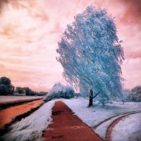 Blue Tree infrared by MichiLauke