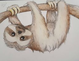 Sloth by oddelli