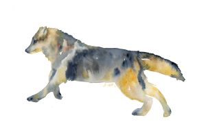 Swift, loose style watercolor by SALTWatercolors