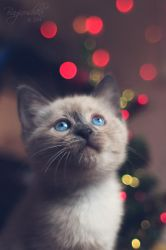 Christmas? What is it?... by Bagirushka