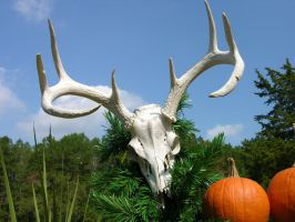 Antlers Skull Stock 2 by FairieGoodMother