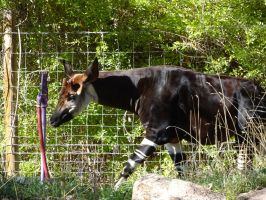 Okapi Water Hose by shinigamisgem