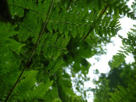 Fern Skyview by NatureGuide
