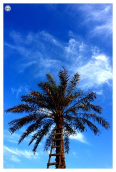 Ascend for success by Shamseh
