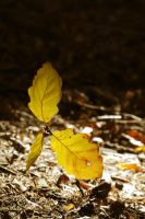 Leaves in the sun by tomsumartin