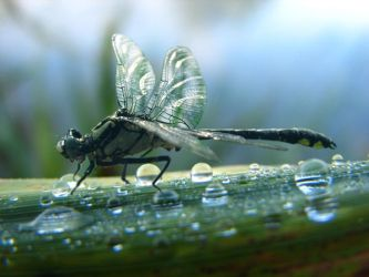Dragonfly by lookforart