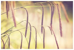 Reeds by OMG-ImSoAwesome