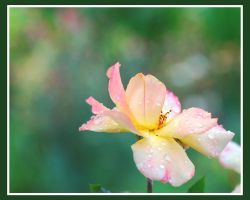 Painted with dew by elanordh