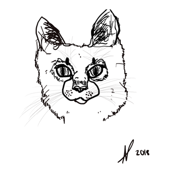 Realistic Style Cat Sketch by SheepyWool