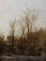 Woodland Texture 11 by dknucklesstock
