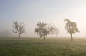 Trees in the fog 7 by archaeopteryx-stocks