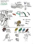Official Ietherwing species Reference Sheet