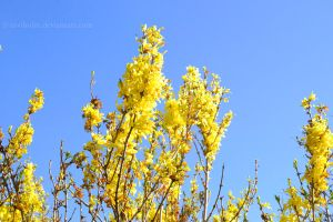 Yellow against blue by NiviHolm