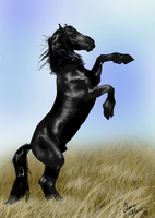 The black stallion Thor by 88Laura88