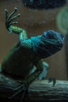 Lizard. by LouHartphotography