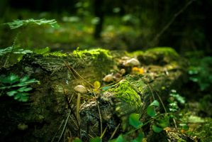 The Forest Floor by kraviec