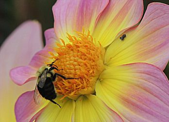 The Bumble Bee and Itsy Bitsy Spider by dmguthery