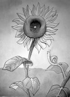 Sunflower by Mawee1034