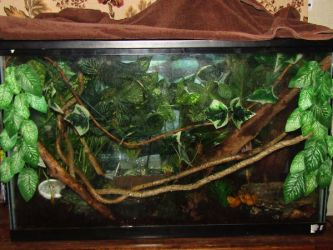 Red Eyed Tree Frogs' Tank by AlexandersMantids